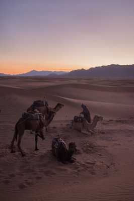 a l e s s a n d r o f a g i o l i - Zagora desert, Morocco