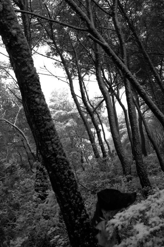 LAIA CENZANO. Interior Designer. Barcelona. - Lola & snow