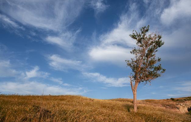 Özgür Ülker Photography -