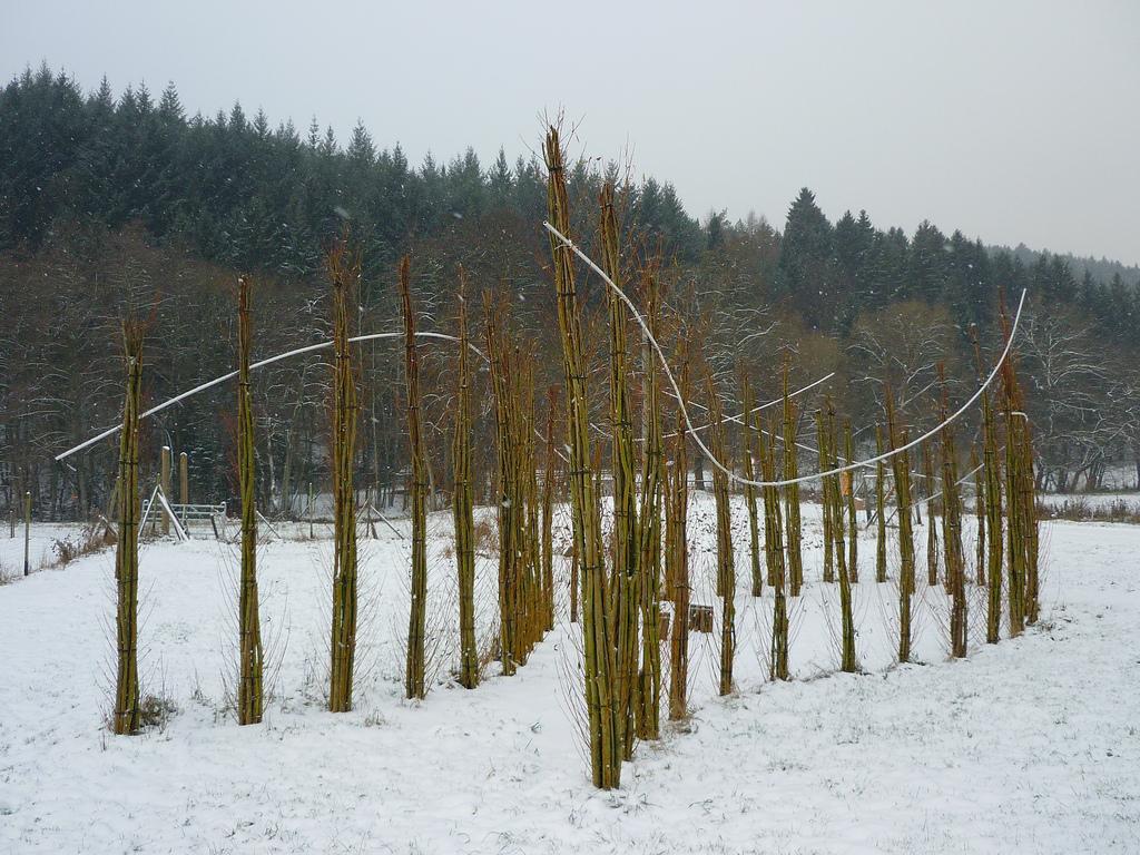 Jörg Kaspari - Landschaftsarchitekt - Winterperspektive