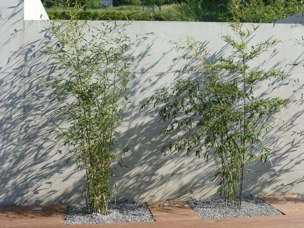 Jörg Kaspari - Landschaftsarchitekt - Bambus