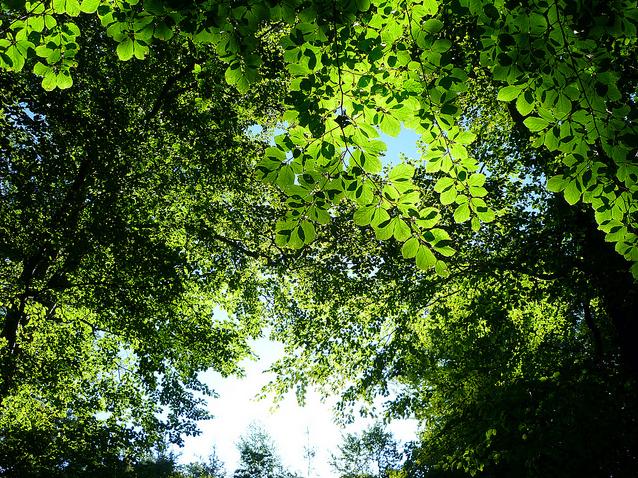 Jörg Kaspari - Landschaftsarchitekt - zum Wald