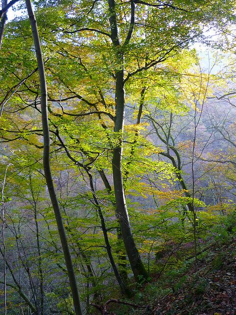 Jörg Kaspari - Landschaftsarchitekt - Herbstlicht