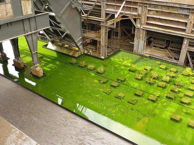 Jörg Kaspari - Landschaftsarchitekt - Die Wasserteppiche umrahmen Gebäude und Höfe. Lichtreflektionen und Spiegelungen erweitern die Perspektive. Modular angeordnete Quadrate aus Wasserpfanzen schaffen eine neue Detailebene.