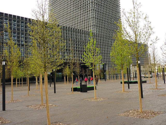 Jörg Kaspari - Landschaftsarchitekt - Dicht angeordnete Bäume werden schnell ein geschlossenes Baumdach bilden.