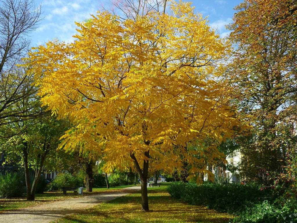 Jörg Kaspari - Landschaftsarchitekt - Bunte Farben im Herbst