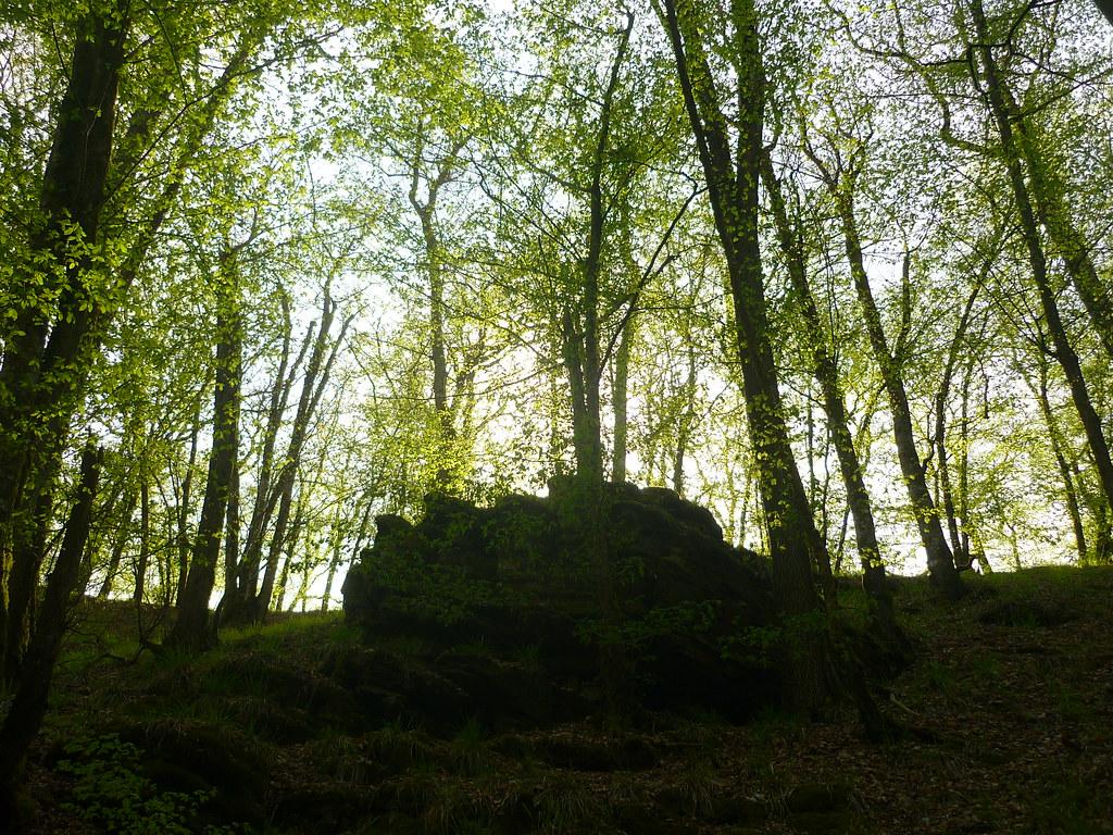 Jörg Kaspari - Landschaftsarchitekt - Tiefe Waldschlucht