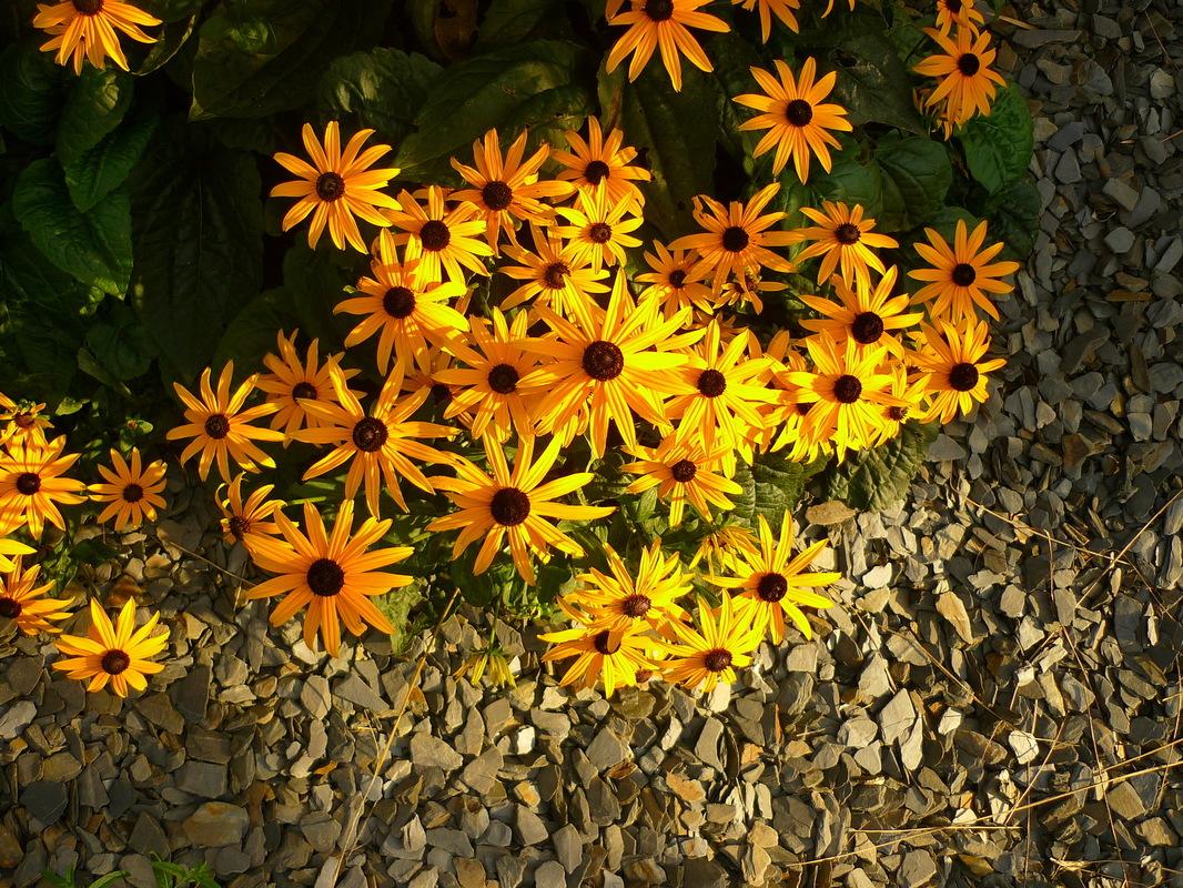 Jörg Kaspari - Landschaftsarchitekt - Farbenfrohe Blüten empfangen die Besucher