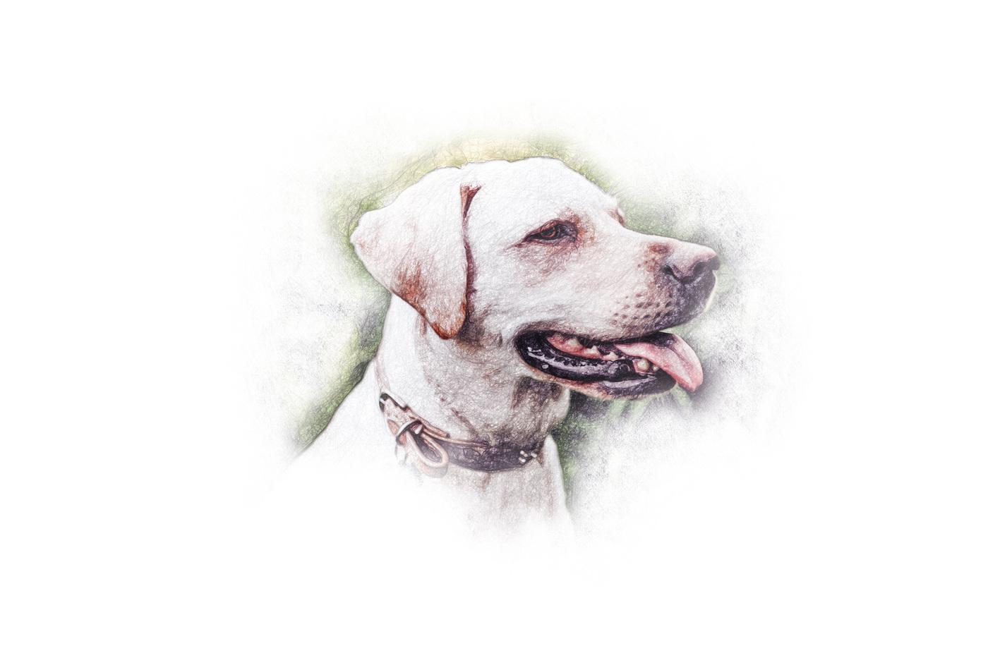 Anthony gabriel Gauci - Pets Corner