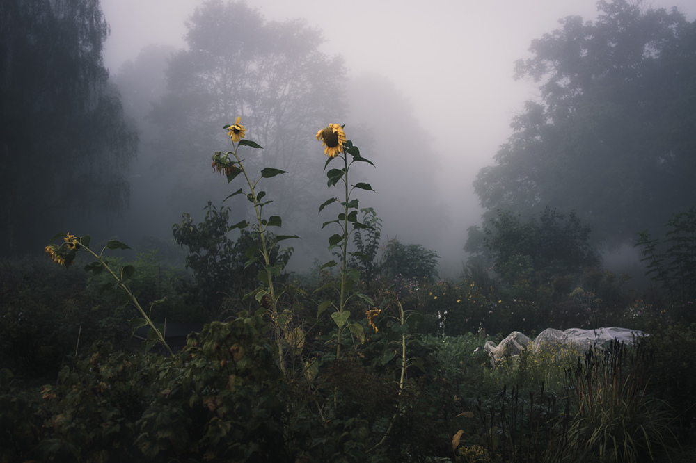 Alison De Mars - Fine Art: Garden