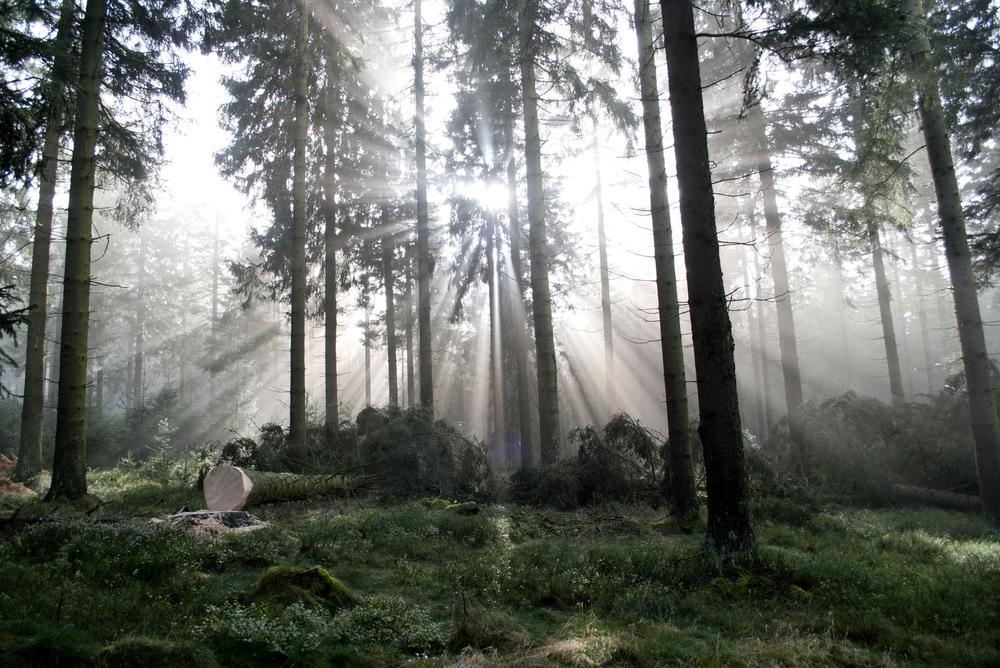 Bert Janssens - Nature