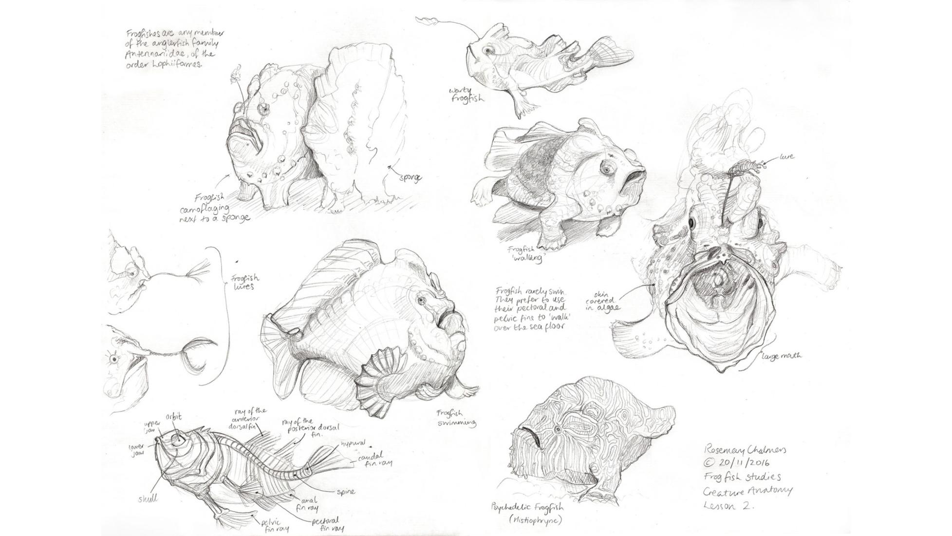 creature anatomy — Rosemary Chalmers // Concept Artist & Illustrator ...