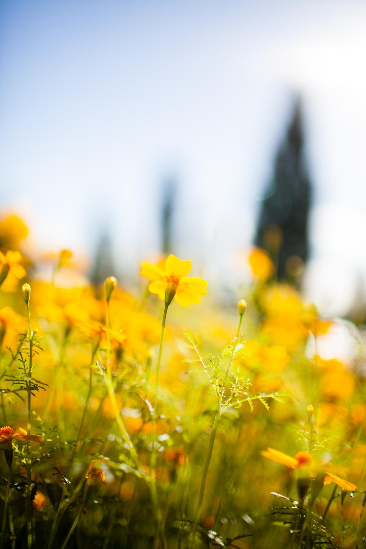 Per Ranung - Garden
