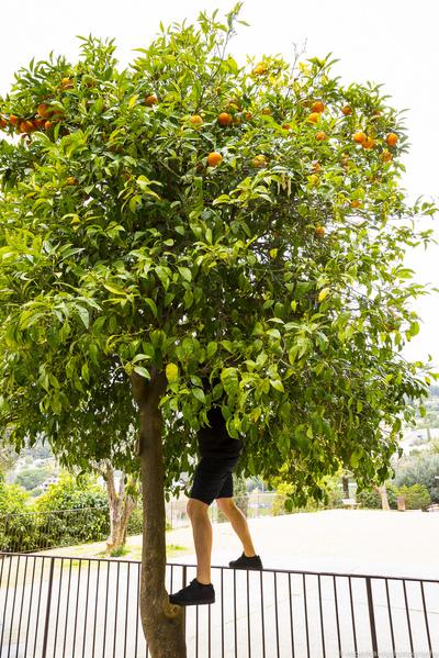 south of france - summer 2015 orange picker