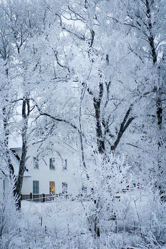 Aestract - Winter