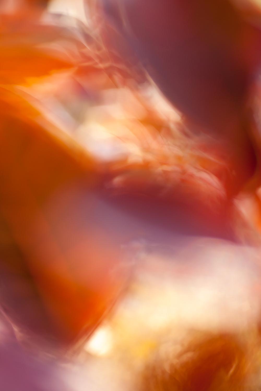 Aestract - Autumn colors edit 1