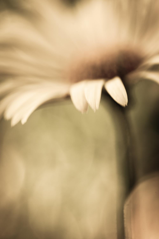 Aestract - Flowers edit 1