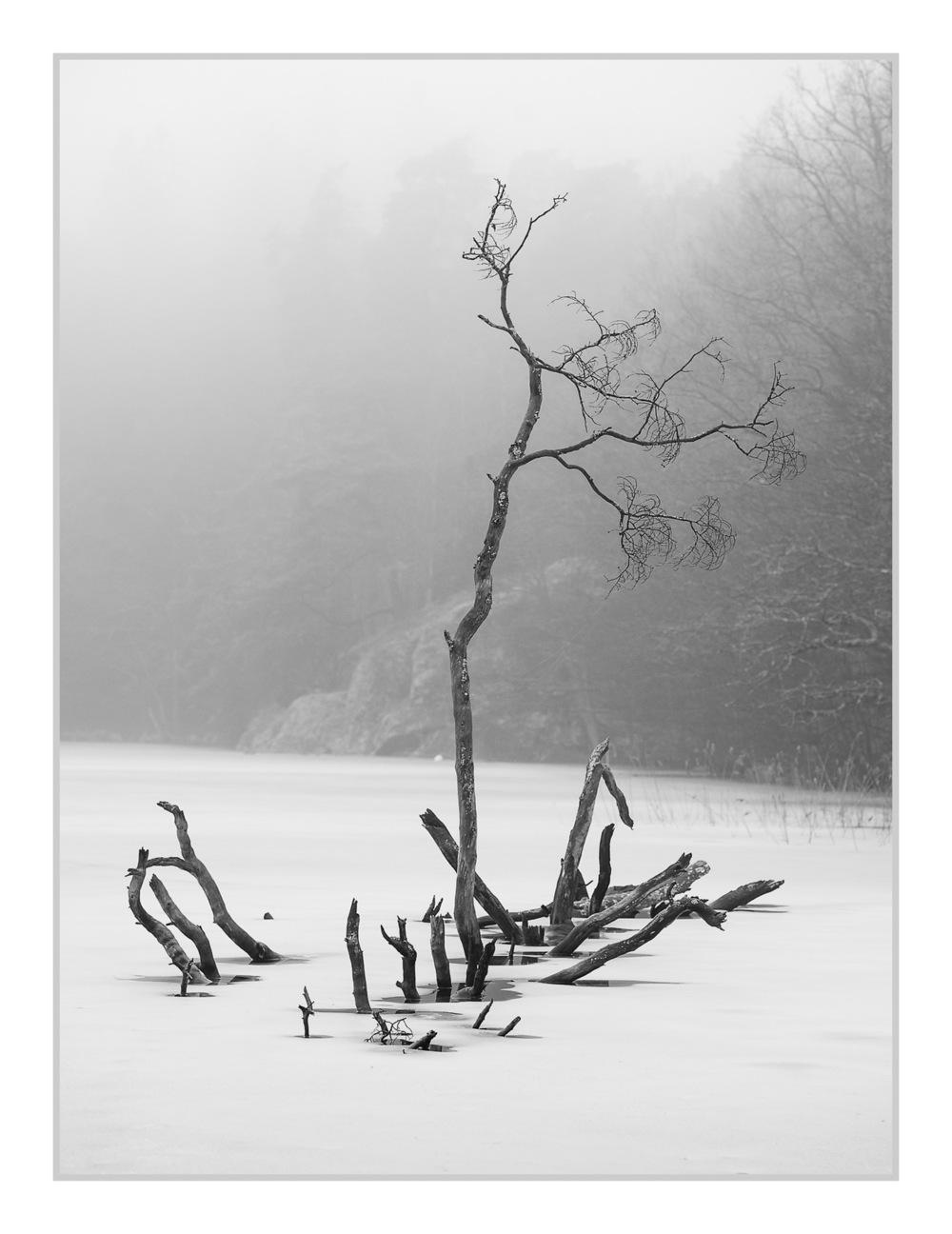 Samuel Edstrom - Landscape