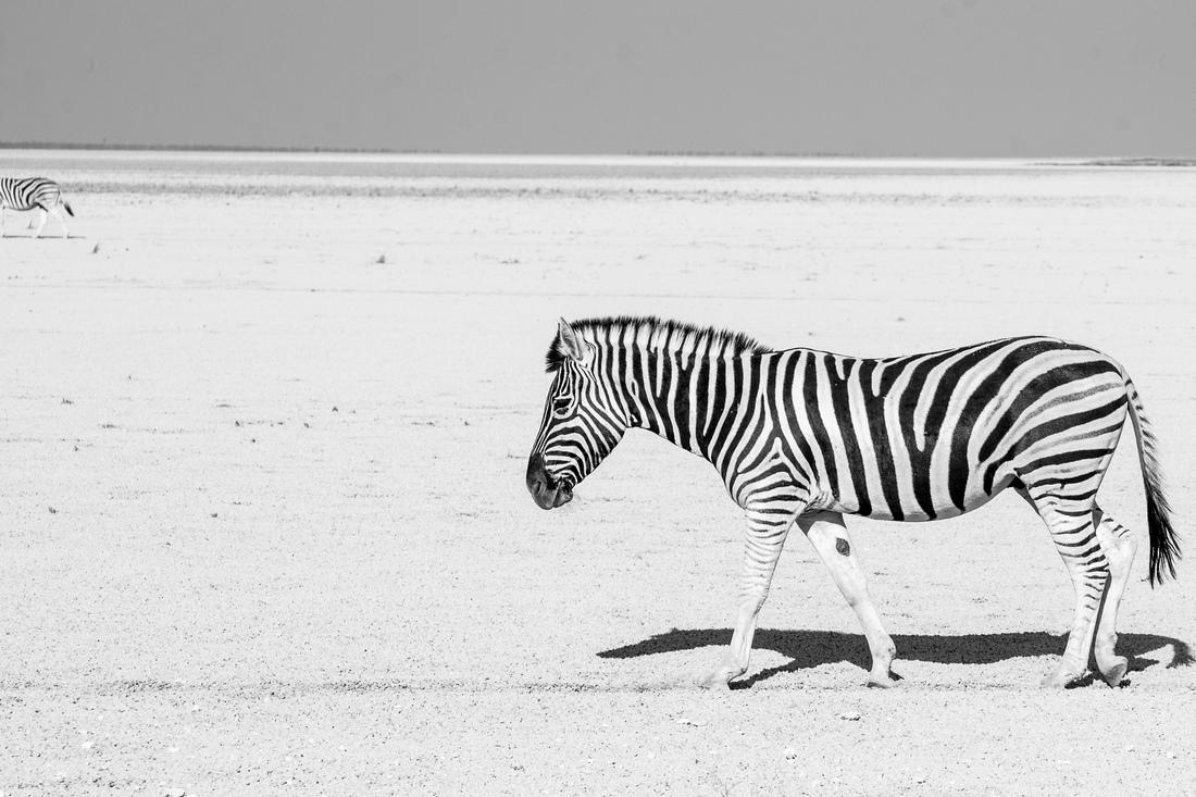 Cate Soprana - Zebre
