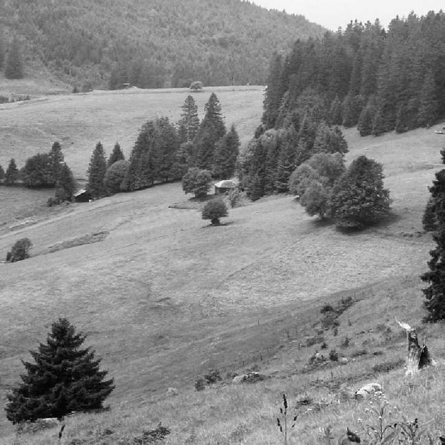 Being a Landscape: Martin Heidegger