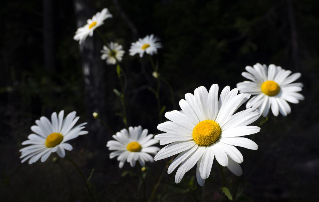 Patrik Arneke - Blommor