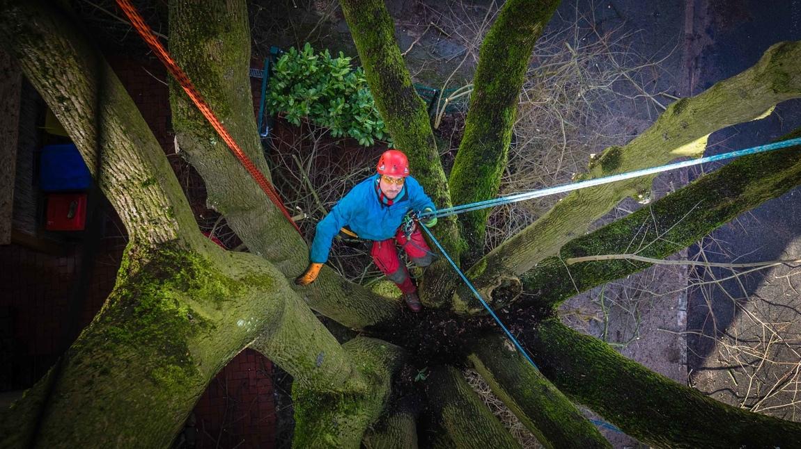 Thomas Byczkowski - Tree climbers
