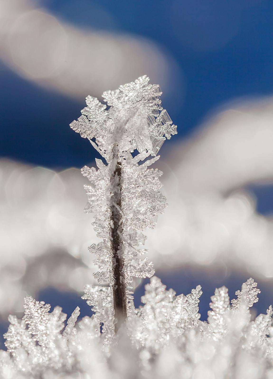 Ylva Wikström - Freeze-up