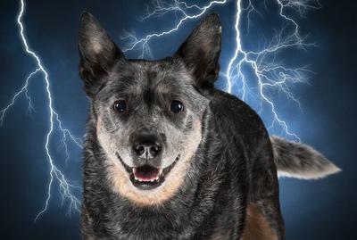 Fine dog photos on Find Creatives