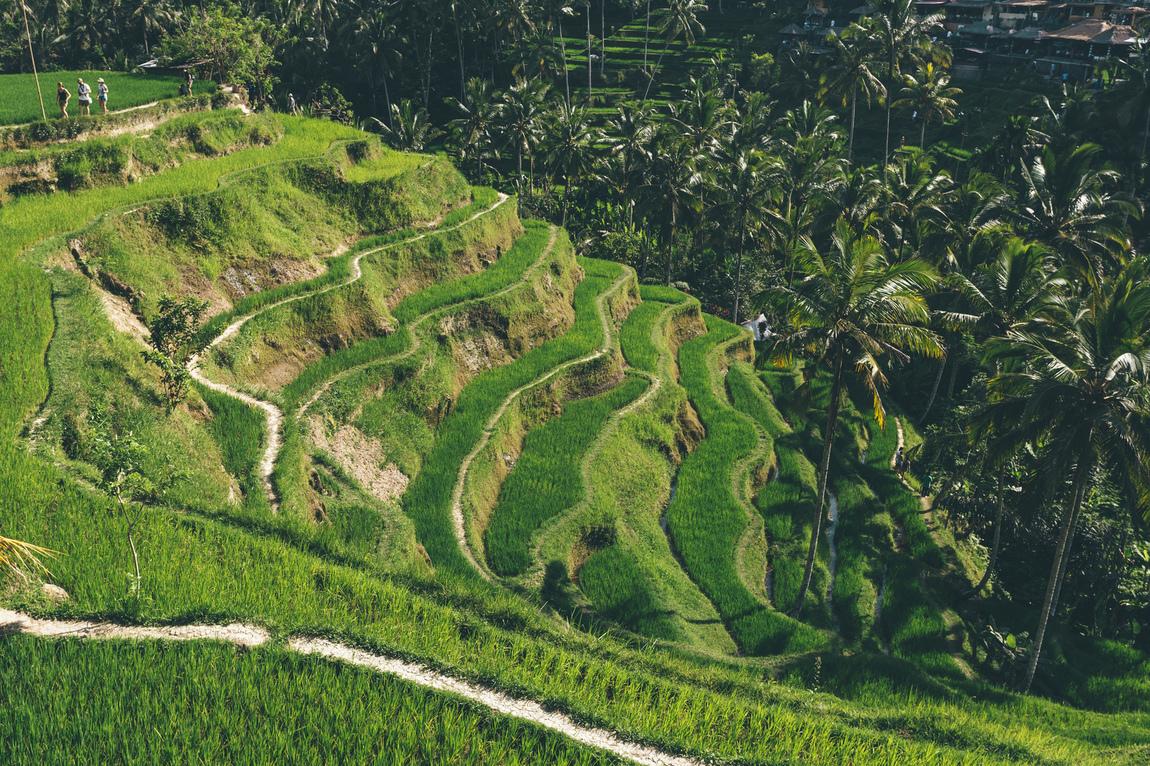 Andrea Dal Soglio - UBUD - Bali, Indonesia