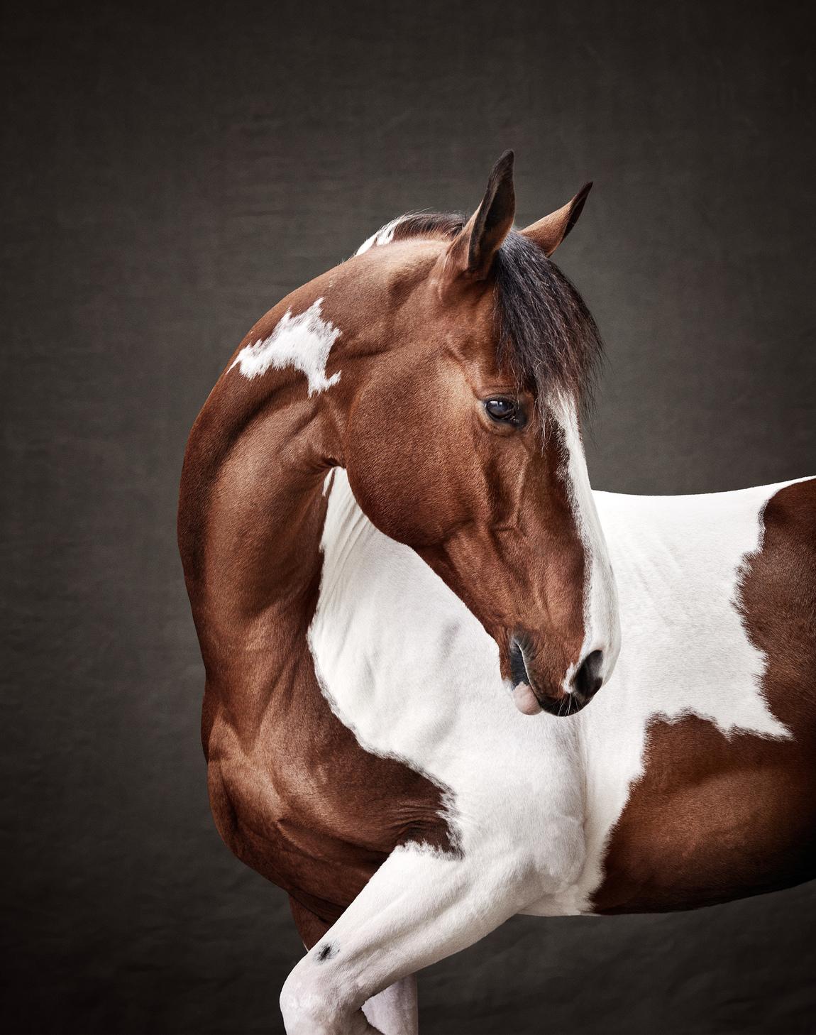 Alexander Crispin - Krafft Horse Nutrition