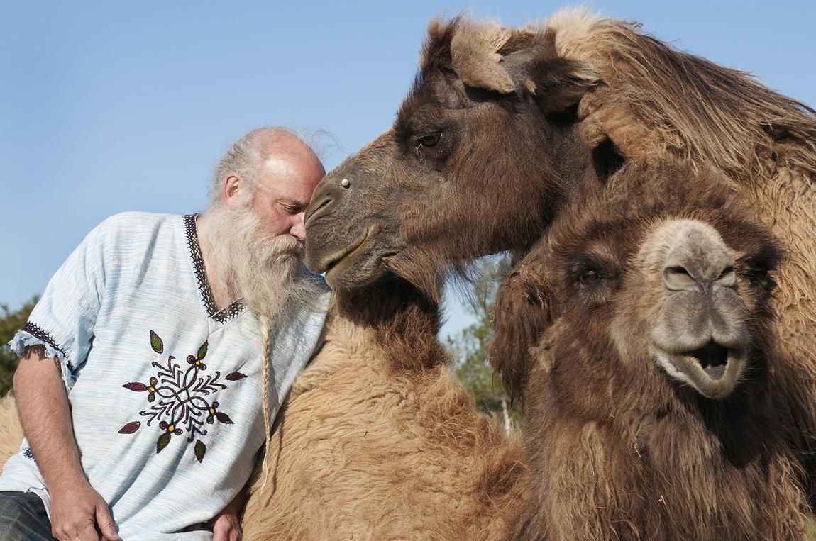 Kristina Wirén - Bengt och hans kameler på Öland