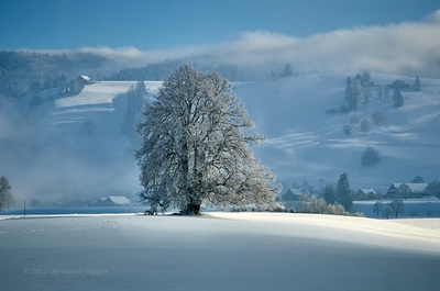 Neil Dolman is a photographers in Switzerland