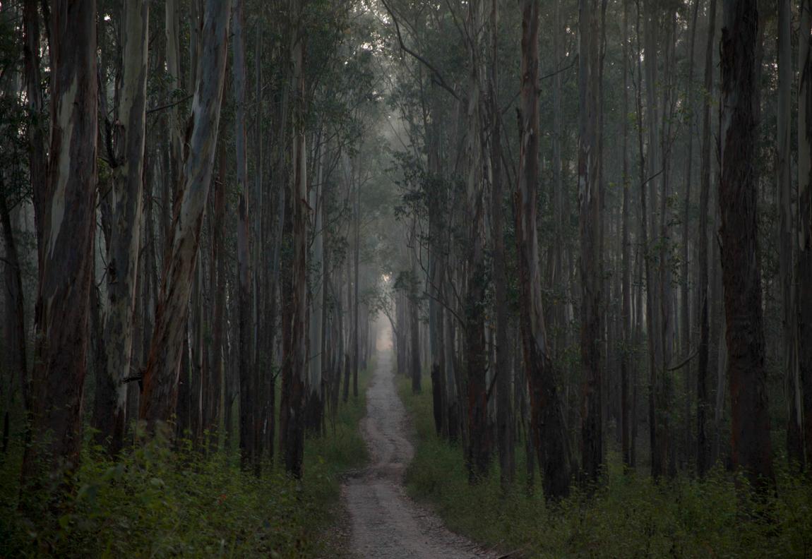 Kristina Junzell - Early morning walk