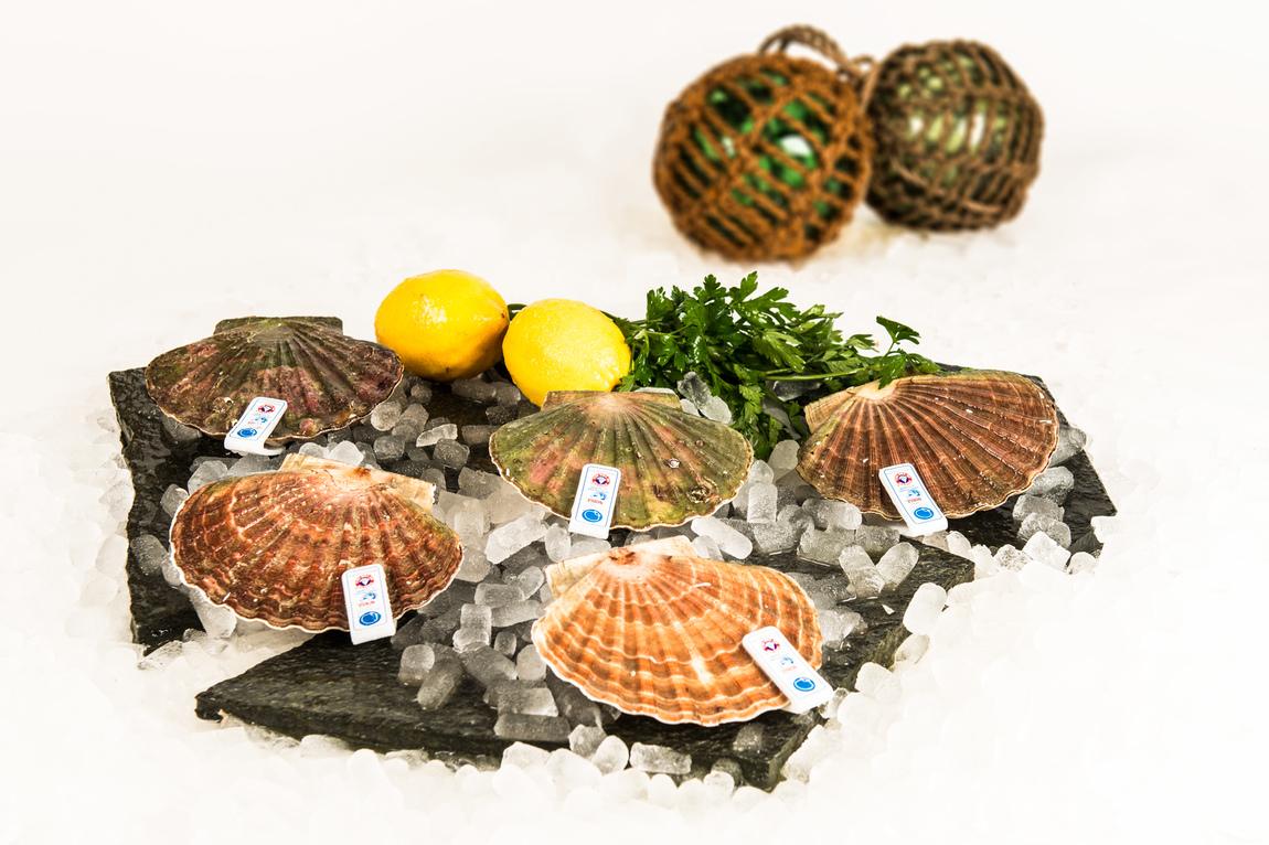 Lilynette Wennlid - Seafood / Skaldjur