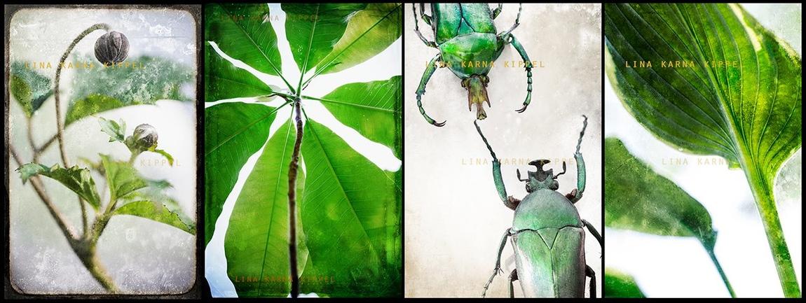 Lina Karna Kippel - Untitled project 3