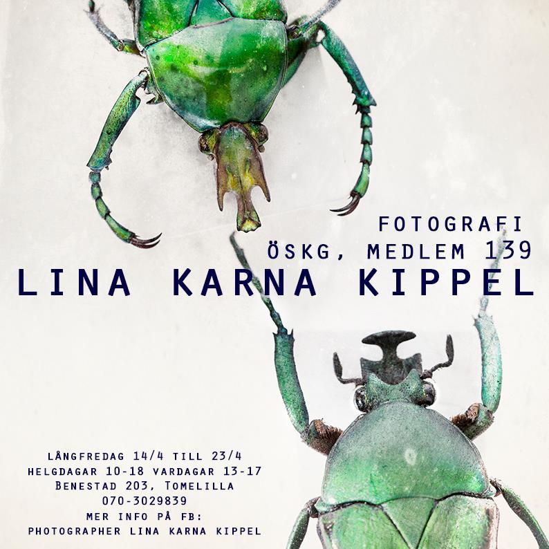 Lina Karna Kippel - Untitled project 7