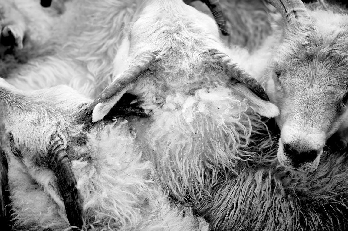 Saerun Noren - Sheep Farmers Iceland