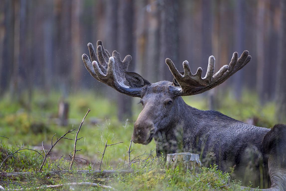 Peter Rosén - Film for Kiruna in Swedish Lapland
