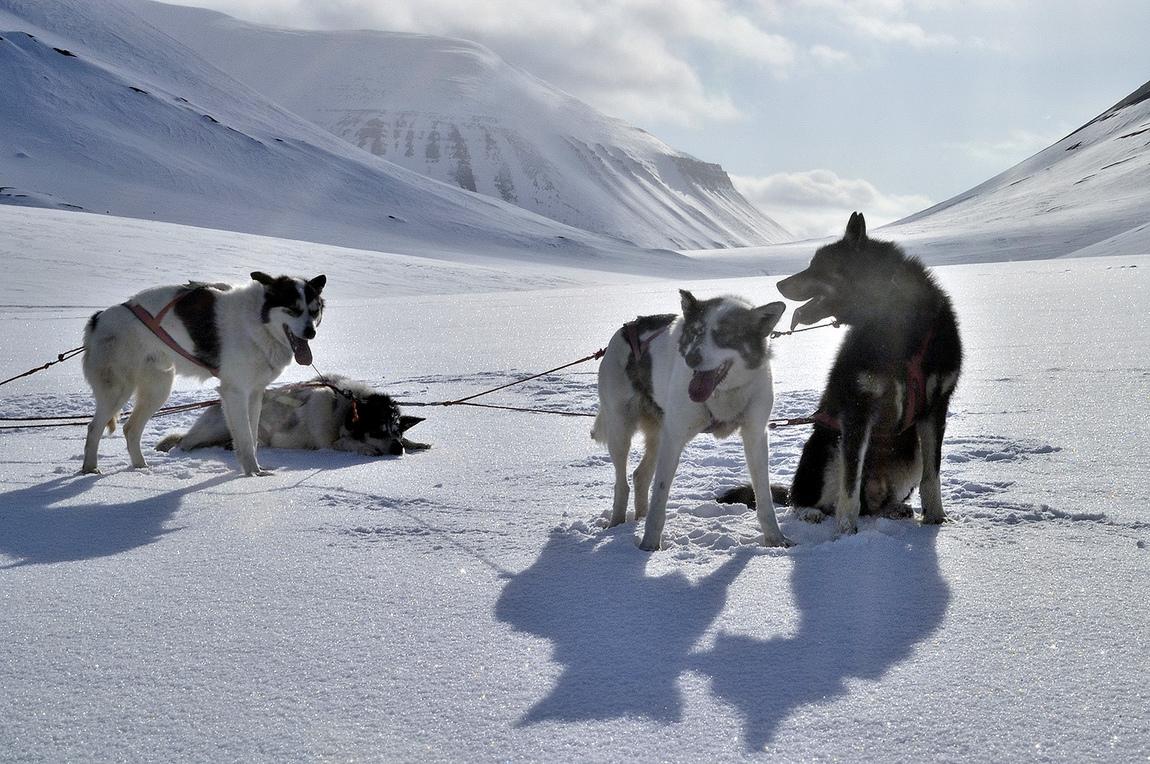Lars Öberg - Svalbard