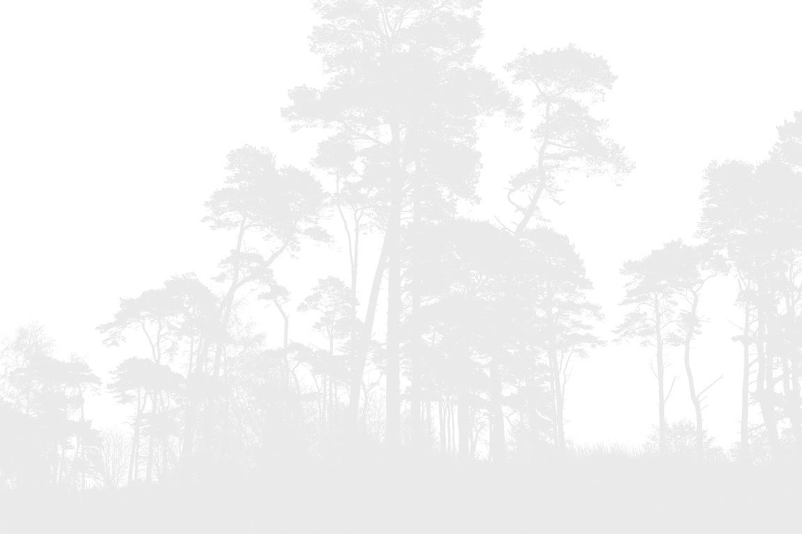 Kentaroo - natur