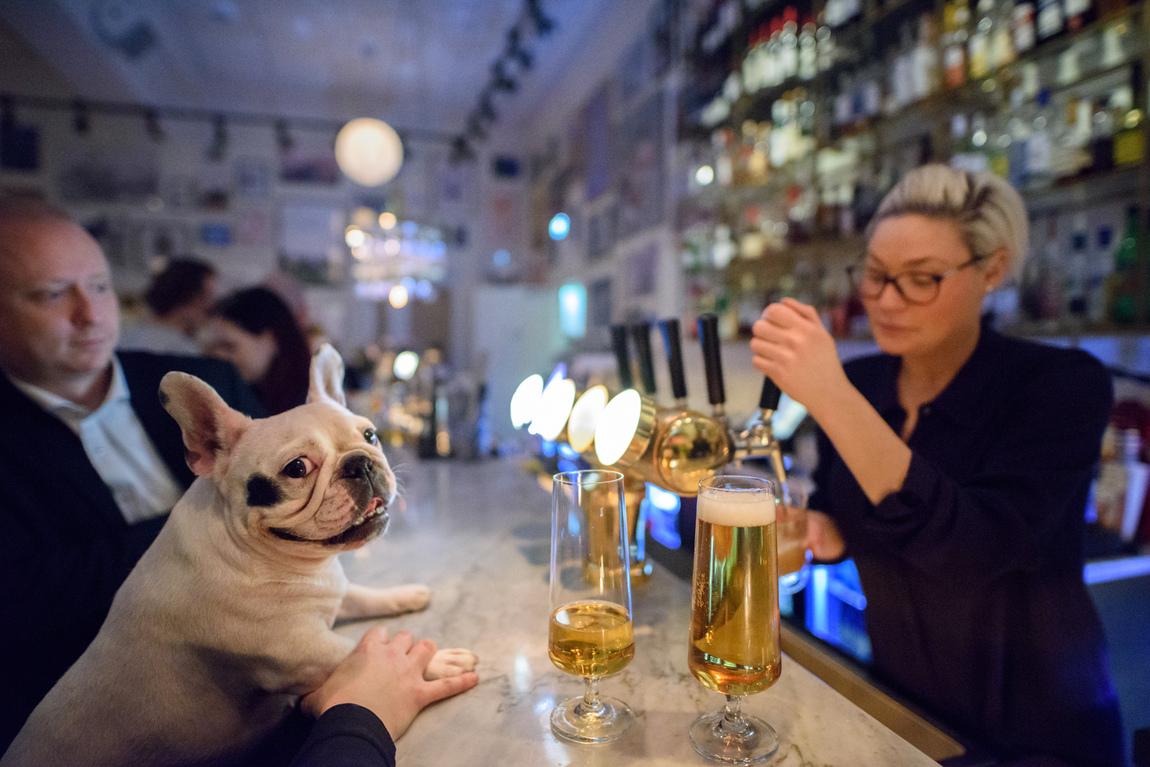 Anna Edlund - Hundar på krogen